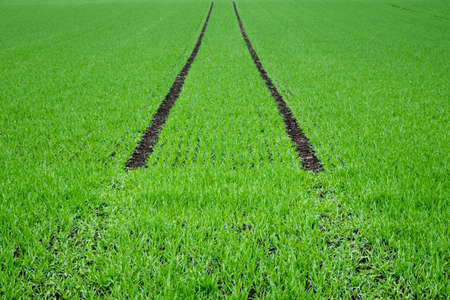 Lush green farmland with dark tracks Archivio Fotografico
