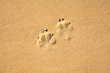 Dog's footprints on sandy beach nothing else