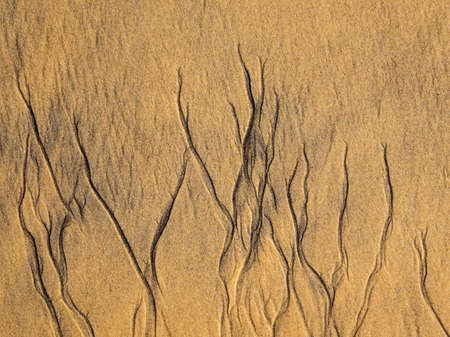 Structures in the sand from tiny trickling rivulets beach receding waters