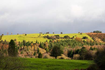 Green colored agricultural farmland on a rainy day Archivio Fotografico