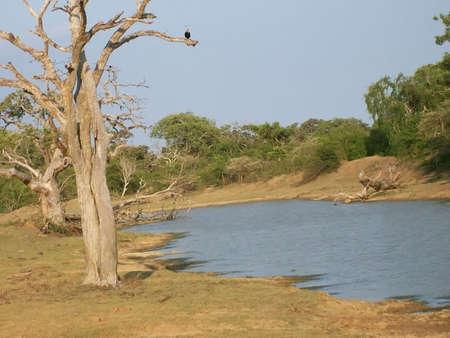 srilanka: Yala national park in Sri-Lanka