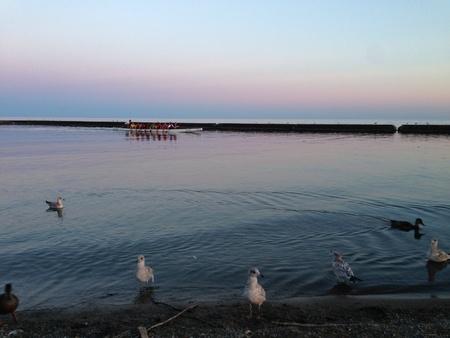 夜のボート、オンタリオ湖の鳥
