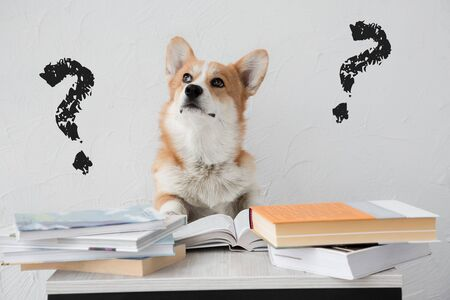 Question mark - solving problem dog finding the answers doing homework with books on white background