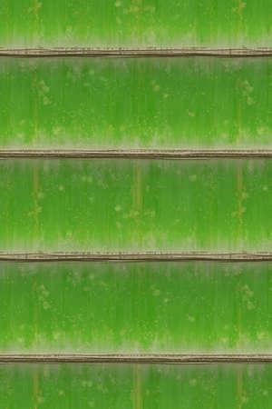 Bamboe textuur. Verticale groene bamboe achtergrond. Hoge resolutie.