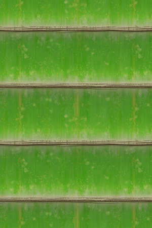 Bamboo texture. Vertical green bamboo background. High resolution.