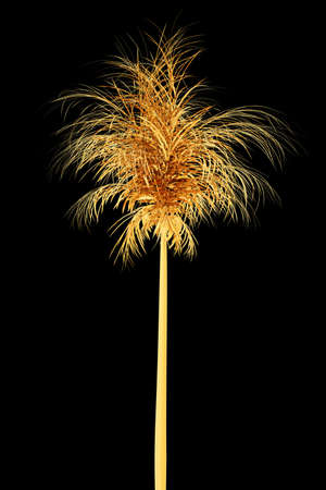 Golden palm on a black background. 3d rendering illustration. High resolution. Stock Photo