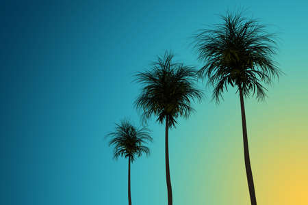 Silhouettes of palm trees on the background of a blue sky. 3d rendering illustration. High resolution.