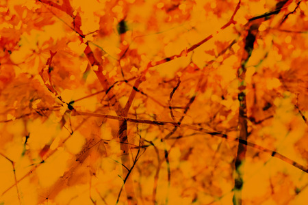 Fall Autumn Abstract Background. Branches, leaves. Red, orange yellow earthy colors