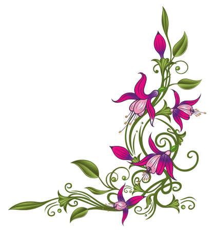 fuchsia flower: Pink fuchsia Illustration