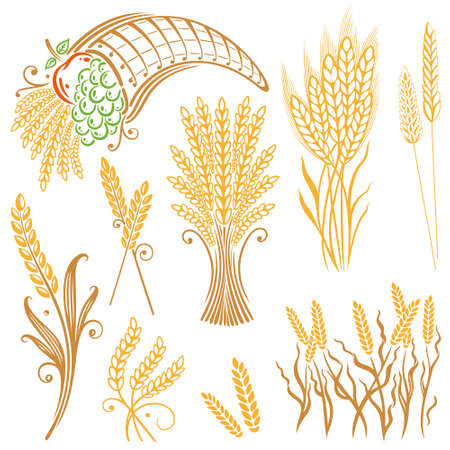 Vector set of colorful grain, corn Illustration