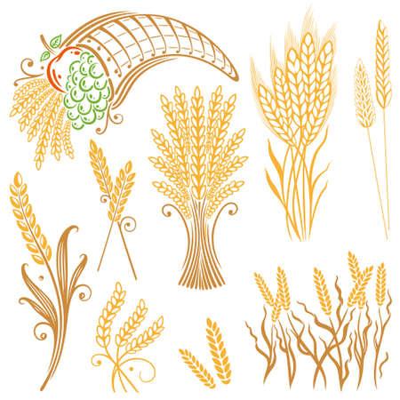 Vector set of colorful grain, corn Illustration