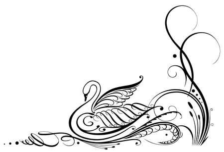 cisnes: Cisne negro caligrafía Vectores