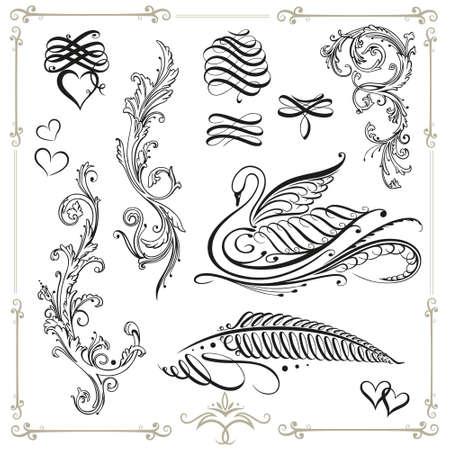 cisnes: Caligraf�a Conjunto del vector, vintage, cisne negro