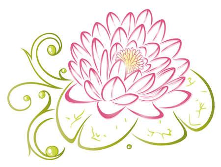 flor loto: Colorido y filigrana de flor de loto de color rosa y verde