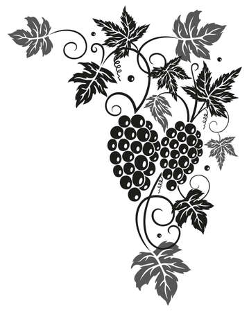 vine and leaves of vine: Vine leaves with grapes