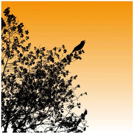 birds  silhouette: Silhouette, tree with bird, sunset Illustration