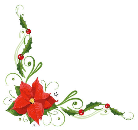 advent: Colorful poinsettia, holly tendril