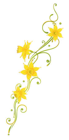 daffodils: Colorful daffodils decoration, easter and spring vector element