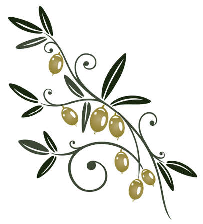 olive branch: Colorful olive branch, kitchen design element  Illustration