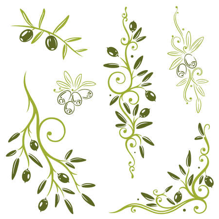 olive branch: Colorful olive vector set, kitchen design elements