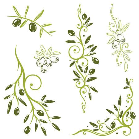 rama de olivo: Colorido conjunto de vectores de oliva, los elementos de diseño de cocinas