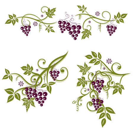 vines: Colorful tendril with grapes and leaves, set Illustration
