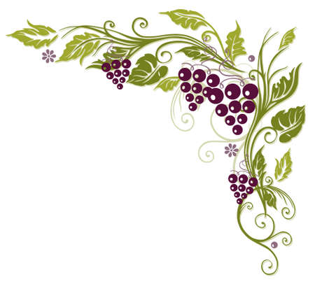 Colorful tendril with grapes and leaves Illustration