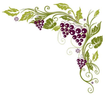 hojas parra: Zarcillo colorido con las uvas y las hojas Vectores