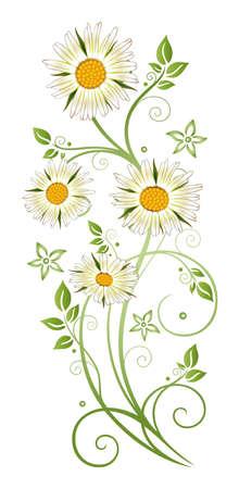 margriet: Kleurrijke zomer decoratie, margriet madeliefjegrens