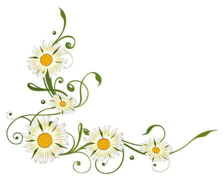 marguerite: Colorful summer decoration, marguerite  daisy  border Illustration