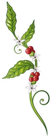 coffee leaf: Colorful coffee plant, coffee decoration Illustration