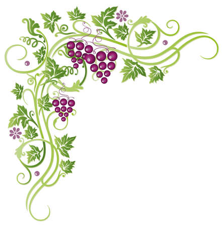 grape vines: Beautiful grape vines, vector decoration Illustration