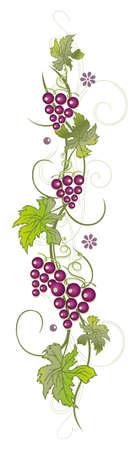 vine border: Filigree vine leaves with grapes, vector decoration, green and purple. Illustration