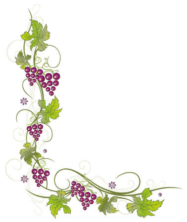 Filigree vine leaves with grapes, vector decoration, green and purple. Illustration