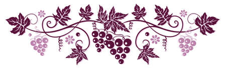 bordeaux: Vine with grapes and vine leaves in bordeaux Illustration