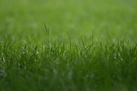 草のクローズ アップ