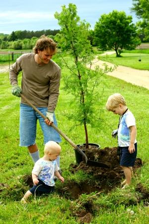 plantando arbol: Padre y Niños que plantan Redwood Tree