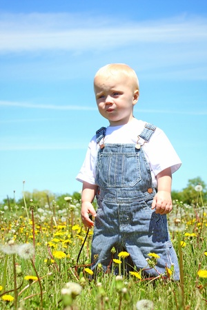 A serious looking baby boy, standing in a field of dandelions, looking into the distance photo
