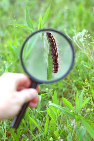 a hand is holding a magnifying glass, looking at a fuzzy catepillar in the grass