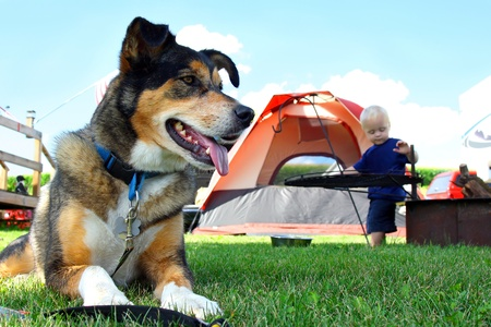 nice day: A happy, friendly German Shepherd dog is laying at a campground by a tent and fireplace, as a baby plays in the background Stock Photo