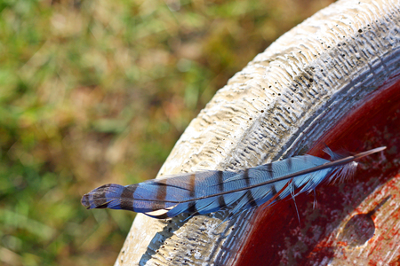 blue jay bird: a pretty Blue Jay Feather rests, left behind on a stone birdbath filled with water, with green grass in the background