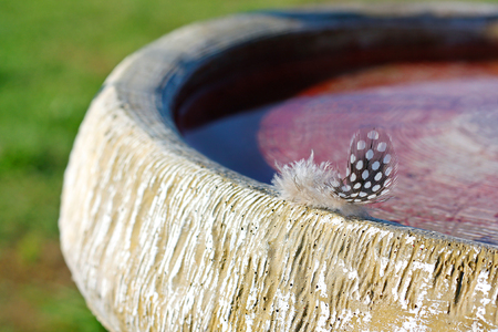 polka dotted: un peque�o blanco y negro punteado polca pluma de corriente suave se ha quedado atr�s en una pileta de cemento.