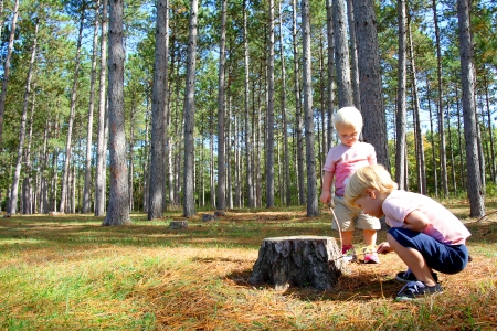 investigating: Two young children, a little boy and his baby brother are crouching down in the forest, exploring for bugs in the grass and tree stumps