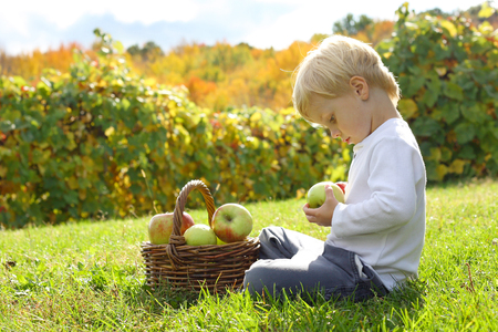 small basket: a young boy is sitting outside at an apple orchard on a sunny autumn day, looking at fruit in a wicker basket. Stock Photo