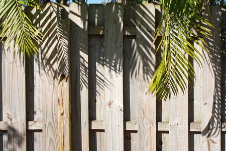 a wood slat yard fenceovergrown with palm tree branches