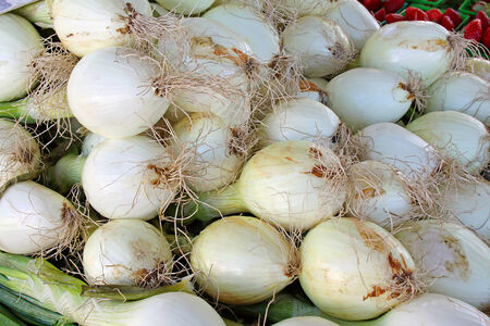 a large pile of sweet white onions on a sale table at a farmer photo