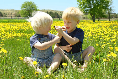 Two young children, a little boy and his baby brother are sitting outside in a meadow of Dandelion flowers, helping each other smell the flowers  photo