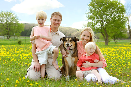 A happy family of four people, mother, father, young child and toddler are sitting in a meadow of Dandelion flowers with their German Shepherd mix dog, on a beautiful Spring day  photo