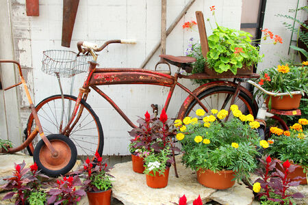 A rusty old, vintage bicycle with a basket is displayed in a flower garden  photo