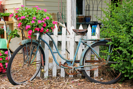 A rusty old vintage bicycle is displayed in a flower garden in the country